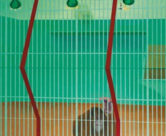 Orang-Outang derrière la grille, 1965 Gille Aillaud